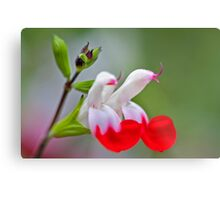 Loud Voice for a Small Flower Metal Print