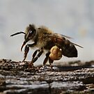 Bee June 2012 by saharabelle