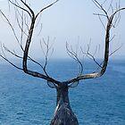 Lure of the Ocean by pauldwade