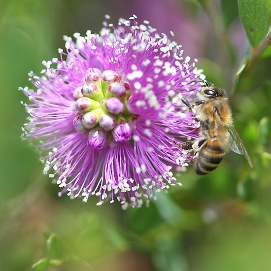 Bee September 2012 by saharabelle