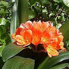 Orange Cactus Flower by Jane Neill-Hancock