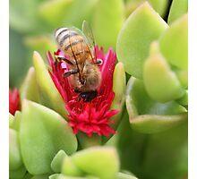 Bee December 2012 Photographic Print