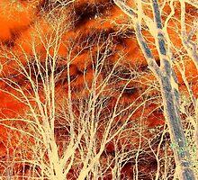 Marmalade Skies by Jane Neill-Hancock