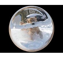 Cindy's Snow Globe's 12 Photographic Print