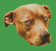 American Staffordshire Terrier Kids Clothes