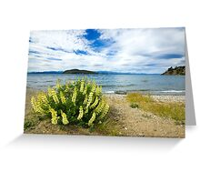 Lupins & the Lake, Bariloche, Argentina Greeting Card