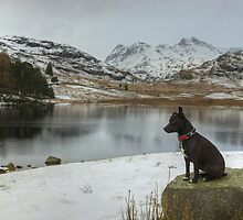The Dog In Winter by Jamie  Green