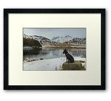 The Dog In Winter Framed Print