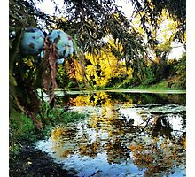 Fall into the Swamp Photographic Print
