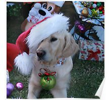Golden Retriever with droopy Christmas Hat Poster