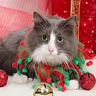 Have a Purrrrfect Christmas by Johanne Brunet