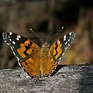 Butterfly by Rick Playle