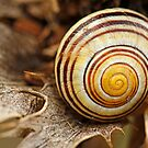 spiral shell by Manon Boily