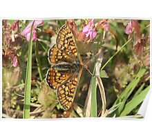 Marsh Fritillary Butterfly, Aberbargoed (South Wales) Poster
