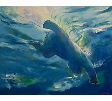 Polar Bear Swim Photographic Print