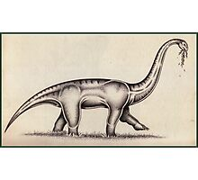 The Sauropod Photographic Print