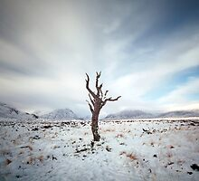 Lone Tree by Maria Gaellman