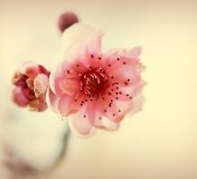 A Promise Of Spring by Evita