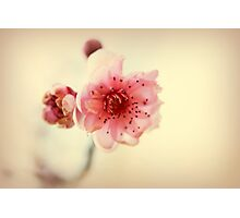 A Promise Of Spring Photographic Print