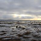 Low Tide Near Raleigh Newfoundland by Vickie Emms