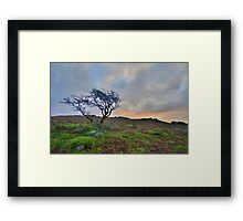 Dartmoor: The Lone Tree at Maiden Tor Framed Print