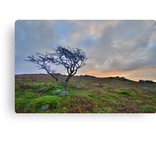Dartmoor: The Lone Tree at Maiden Tor Canvas Print