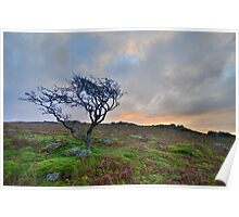 Dartmoor: The Lone Tree at Maiden Tor Poster