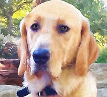 """""""Shiloh""""  Guide Dog in Training by kcd-designs"""