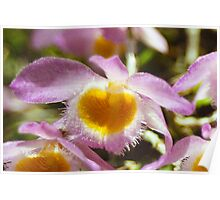 Purple & Yellow Orchid Poster