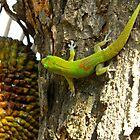 Green Gecko 2 by Oksana Fox