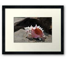 Seashell on the sand at the ocean beach Framed Print