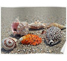 Seashells on the sand at the ocean beach Poster