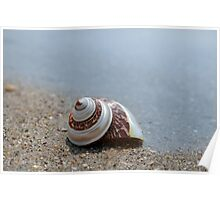 Seashell on the sand at the ocean beach 6 Poster