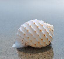 Seashell on the sand at the ocean beach 7 by Anton Oparin