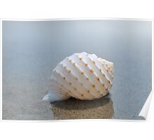Seashell on the sand at the ocean beach 7 Poster