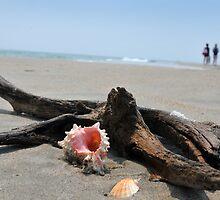 Seashell on the sand at the ocean beach 5 by Anton Oparin