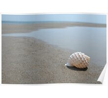 Seashell on the sand at the ocean beach Poster