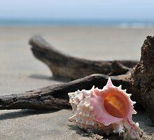 Seashell on the sand at the ocean beach by Anton Oparin