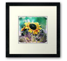 Grungy Sunflower Framed Print