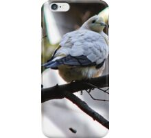 Pied Imperial Pigeon iPhone Case/Skin
