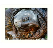 common snapping turtle Art Print