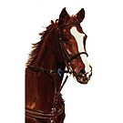 Proud - Thoroughbred Horse iPhone &amp; iPod Cases by Patricia Barmatz