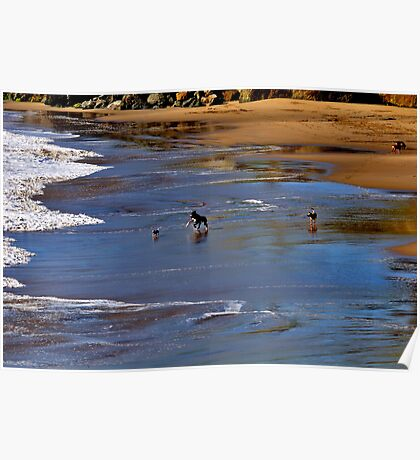 Dogs at play Poster