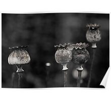 poppies - almost gone Poster