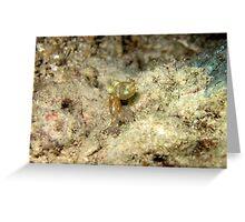I'm small- a pygmy squid Greeting Card