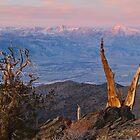 Bristlecone Bishop Sunrise by Nolan Nitschke