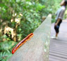 watch out for the millipede by Michelle Jonker