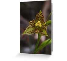 Thelymitra benthamiana (Blotched Sun-orchid) Greeting Card