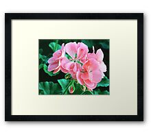 Geranium 'Patriot Bright Pink' Framed Print