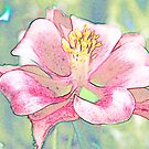 Pink Columbine by Sharon Woerner